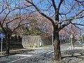 菅さくら公園・さくら通り - panoramio.jpg