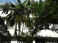 0126jfSanta Maria Goretti Parish Church Manilafvf 03.jpg