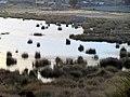105 Reeds Lake Titicaca Peru 3253 (14995956400).jpg