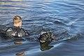 1st MSOB Canine Handler Surf Passage and Zodiac insert training 160209-M-AX605-068.jpg
