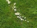 20050823 Vac 335 Stukenbrock Senne paddestoelenkring (10213956745).jpg