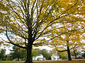 2011 NewburyMassachusetts October 3910.jpg