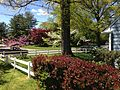 2013-05-04 14 02 34 Front yard at 988 Terrace Boulevard in Ewing, New Jersey.JPG