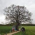2014-04-17 Boomtuin Diepenheim Jeroen Kooijmans.jpg