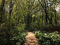 2014-05-11 11 12 50 View along the Doctors Creek Trail in Clayton Park, Upper Freehold Township, New Jersey.JPG
