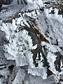 2015-10-29 14 38 42 Rime-covered rock near the summit of Star Peak, Nevada.jpg