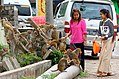 20160802 Feeding monkeys Mount Popa 7122 DxO.jpg
