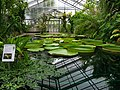2018-06-18-bonn-meckenheimer-allee-169-botanischer-garten-victoriahaus-01.jpg