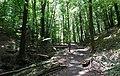 20180522185DR Dohna Naturschutzgebiet Spargrund.jpg