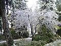 25. Bucuresti, Romania. Din Ciclul BUCURESTIUL SUB ASEDIUL FRIGULUI, Ianuarie 2019. Cimitirul Bellu Catolic. (Oare e Primavara).jpg