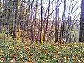 565 01 Choceň, Czech Republic - panoramio (19).jpg