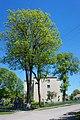 61-216-5022 Дерево Міцкевича, Гримайлів (2).jpg