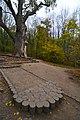 71-254-5023 Zalizniak Oak DSC 8063.jpg