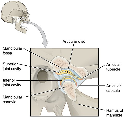 tmj exercises to relieve jaw pain, clicking, and popping - the articular disc