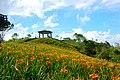 983, Taiwan, 花蓮縣富里鄉新興村 - panoramio (5).jpg