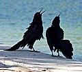 ANGRY BIRDS (27597250002).jpg