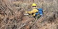 A firefighter uses a drip torch to light vegetation piles in upper Courthouse Wash. These piles are accumulations of plant (dfeec04c-ab84-4347-b181-2d3080abf4ef).jpg