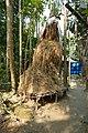 A haystack in Chandpur district.jpg