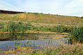 A pond below the M11 embankment at Woodland Trust wood Theydon Bois Essex England.JPG