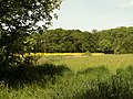 A view of Hoe Wood from Tey Road - geograph.org.uk - 805348.jpg