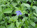 Ab plant 500.jpg