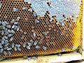 Abeilles et ruches 21.JPG