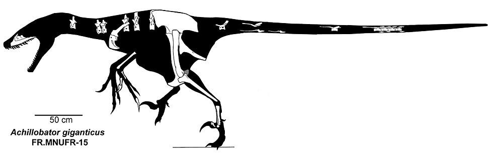 Achillobator giganticus skeleton