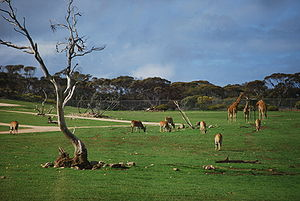 The african plains enclosure with giraffe in t...