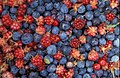 Alaska wild berries.jpg