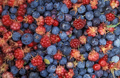"Alaska wild ""berries"" from the Innok..."