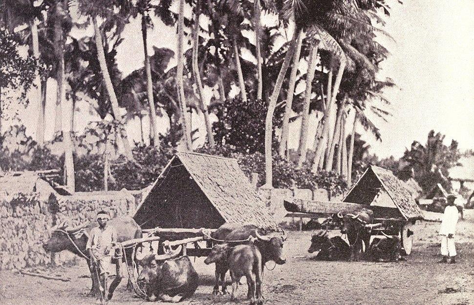 Albay wagons, 1899