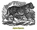 Alpine spaniel 1848.jpg
