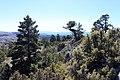 Alto de las Barracas vista (2).JPG