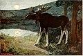 American animal life (1916) (14783477983).jpg
