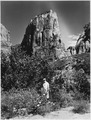 Angel Landing from upper campground. Rocky Mountain Bee Flower and Datura in foreground. - NARA - 520345.tif