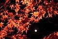 Arashiyama Hanatōro, Nison-in 嵐山花灯路・二尊院 紅葉と月DSCF5364.JPG
