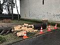 Arbre coupé à l'intersection de la Montée de la Paroche et de la rue des Andrés à Saint-Maurice-de-Beynost (Ain, France) - 7.JPG