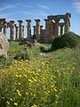 Archeologisch park Selinunte Oostheuvel.JPG