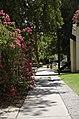 Arizona State University Campus, Tempe, Arizona - panoramio (30).jpg