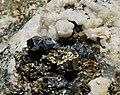 Arsénopyrite, pyrite, calcite et quartz (Mexique).JPG