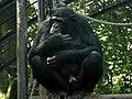 Artis zoo, Amsterdam, Netherland (80068822).jpg