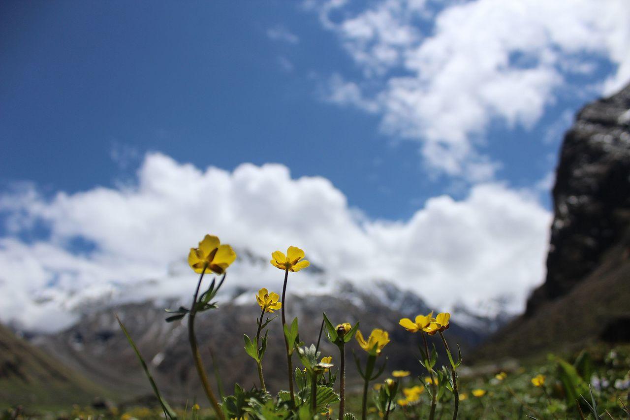 Fileatta valley flowers mountain viewg wikimedia commons fileatta valley flowers mountain viewg mightylinksfo