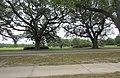 Audubon Park New Orleans 7 April 2020 - 04.jpg