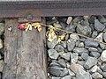 Auschwitz rose P5190046.jpg