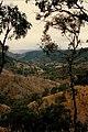 Australian bush between Kinbombie and Galangowan. - panoramio.jpg