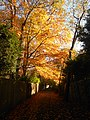 Autumn colours, alley off Bunch Lane, Haslemere.jpg