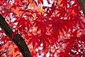 Autumn foliages.jpg