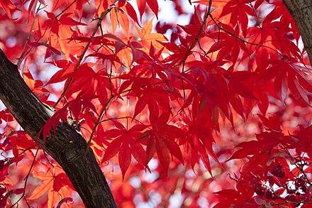 440px-Autumn_foliages.jpg