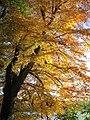 Autumn glory by Swinsty reservoir - geograph.org.uk - 878543.jpg