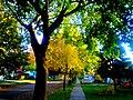 Autumn in Madison - panoramio (22).jpg